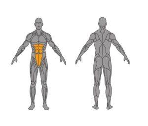 obere Bauchmuskeln